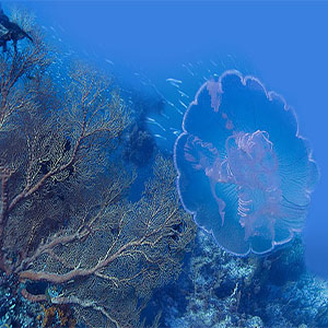 Scuba diving in the Andaman